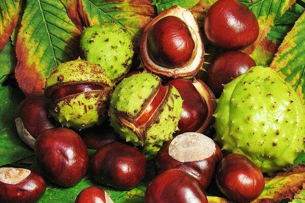 Népszerű gyógyszer a prostatitis gyógynövényektől Aloe a prosztatitisből