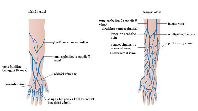 visszerek vannak a kezekben a női szervek varikózisának tünetei