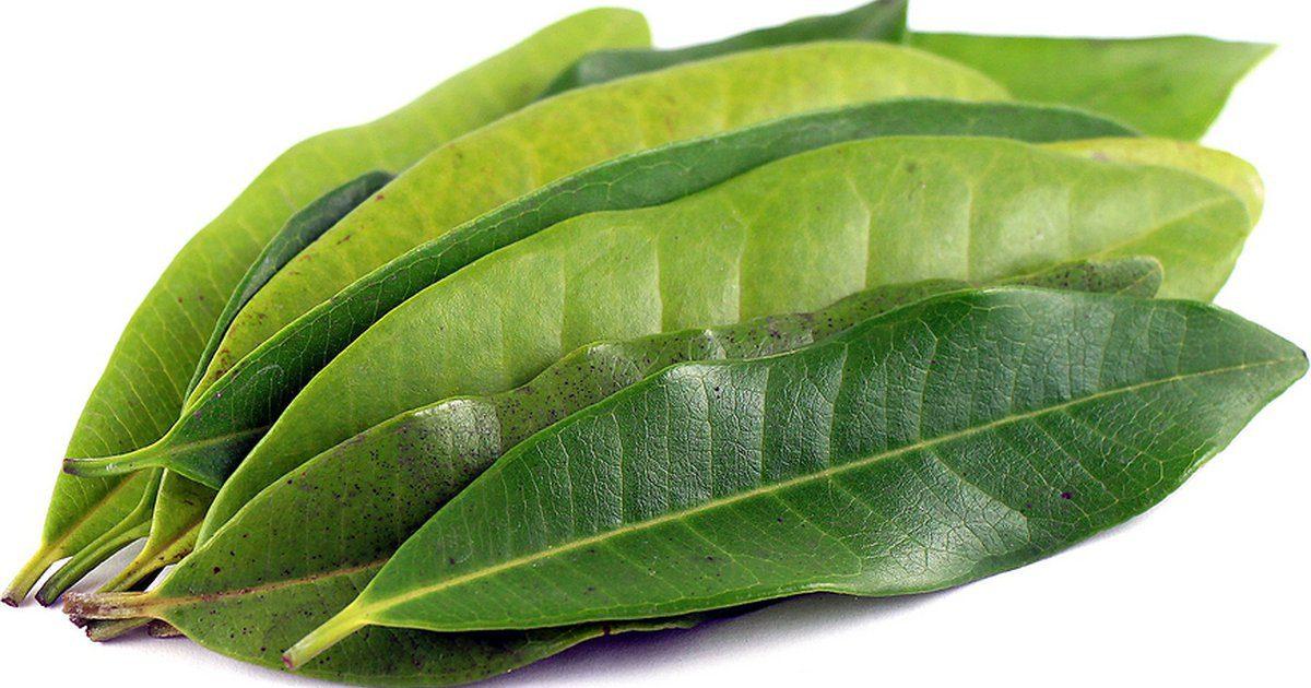 ragyogó zöld a visszér ellen mit kell inni visszérrel a lábakon